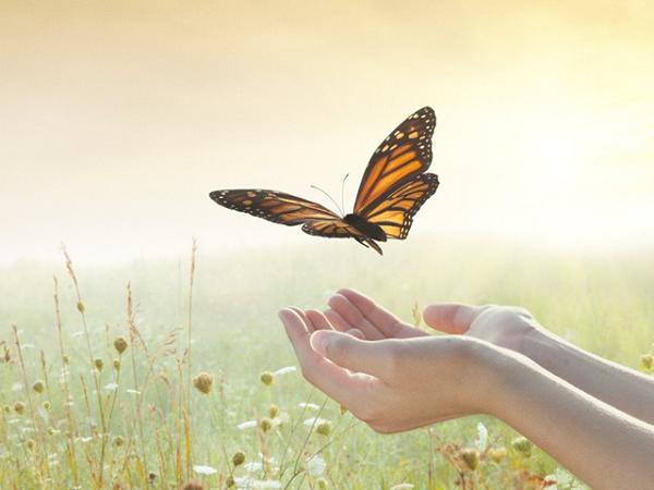 Trái tim rộng mở thì đất trời thênh thang. Buông bỏ được 6 điều sau sẽ có thành công và hạnh phúc